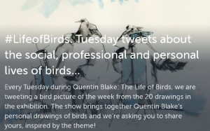 life of birds storify